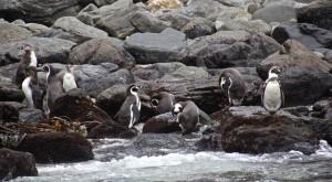 Leonor Varela y Oceana claman defensa por Punta de Choros y alrededores