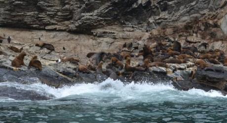 Exigen retiro de proyecto minero en Punta de Choros por Caso Penta