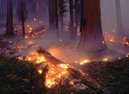 Los bosques que mata el fuego