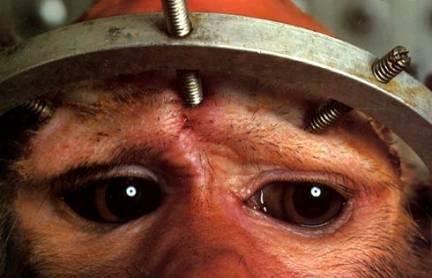 Los derechos de los animales pueden esperar: La UE no frena los ensayos