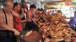 Una de las pavorosas postales del festival chino de Yulin, donde son sacrificados 10 mil perros. El consumo anual del gigante asiático llega a los 10 millones de canes.