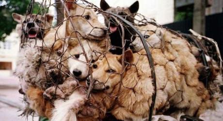 Vietnamitas en campaña contra consumo de carne canina