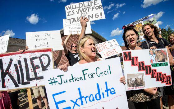 Zimbabwe pide extradición<br/> del dentista-cazador